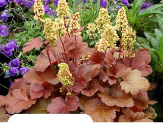 Садовые цветы почтой купить украина заказать цветы с доставкой в сыктывкаре